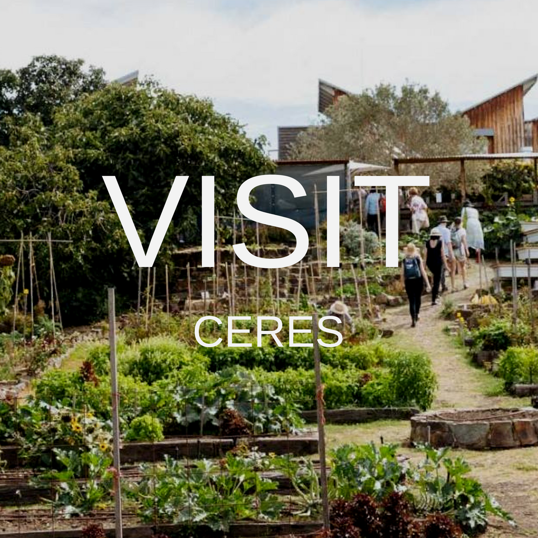Visitceres